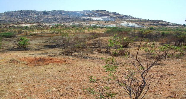 Brief: Rehabilitating Indian wasteland - a role for afforestation