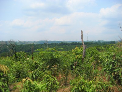 Kambodja landscape