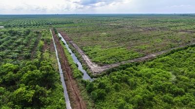 Palm oil plantation in Riau Indonesia.