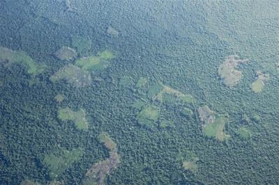 Amazonas blog_Clearing Guaviare