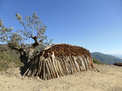A stack of fuelwood on the road side. Photo Laura Kmoch