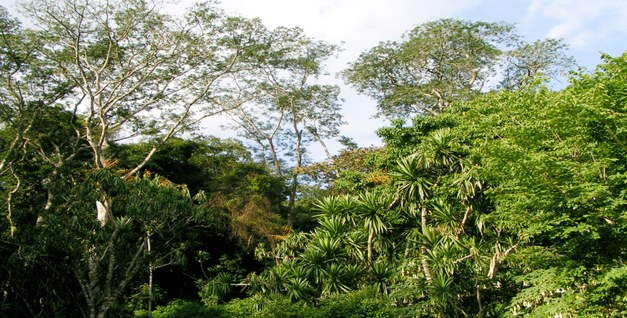 Brazilian Agriculture and Environmental Legislation: Status and Future Challenges