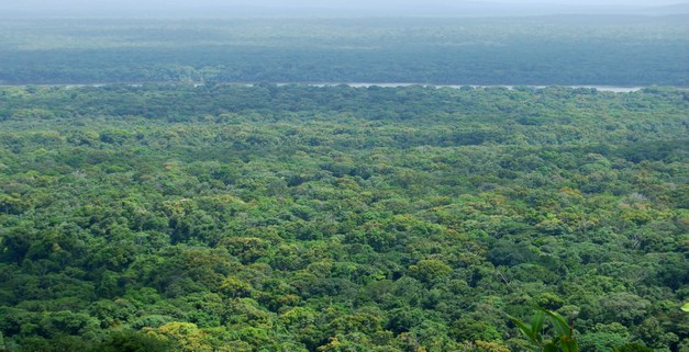 Brief: In the aftermath of a REDD+ bilateral agreement
