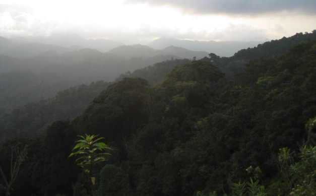 Climate Sensitivity of Tropical Trees Along an Elevation Gradient in Rwanda