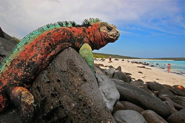 Democracy, development and the marine environment
