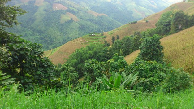 Farming + Forests = Food security: Integrated landscapes offer hope of sustainability in Asian uplands