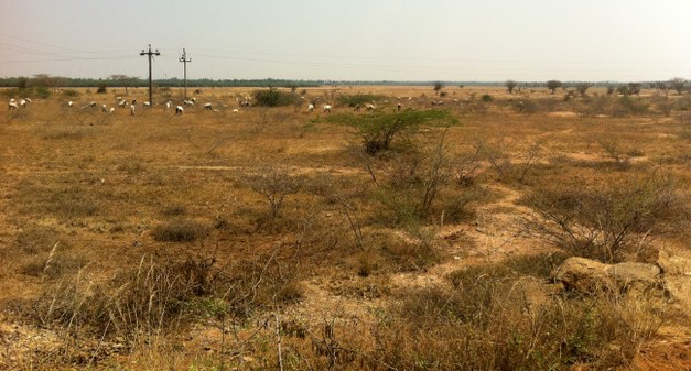 Focali brief: Can India´s wasteland be used for biomass plantations?