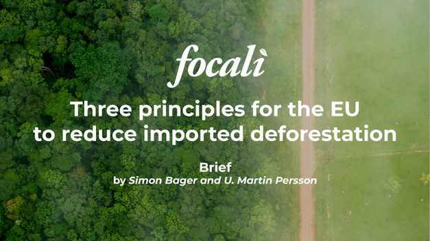 New Focali brief: Three principles for the EU to reduce imported deforestation