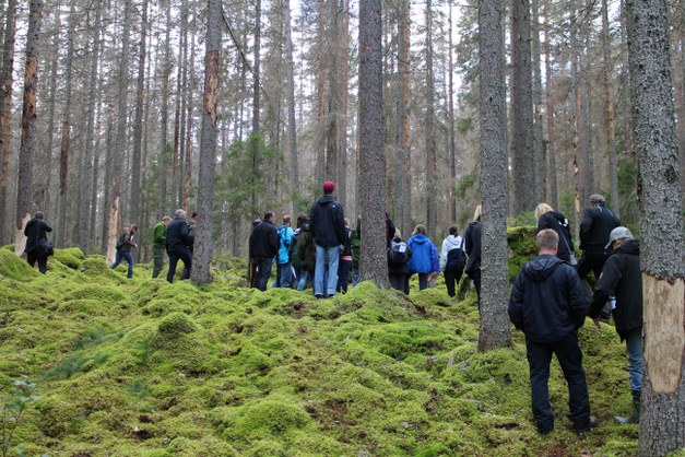 Focali brief: What is the preference of Swedish forestry stakeholders - biodiversity or production goals?