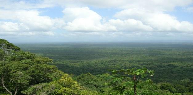 Focali Country Brief Guyana
