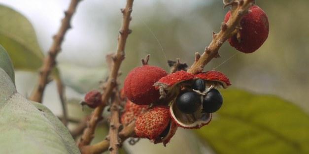 Focali brief: Food security in Sri Lankan homegardens