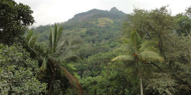 Forest cover change in Sri Lanka: The role of small scale farmers