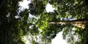Life history traits predict the response to increased light among 33 tropical rainforest tree species