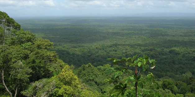 New Focali Brief: Guyana-Norway REDD+ agreement - Payments based on performance - or politics?