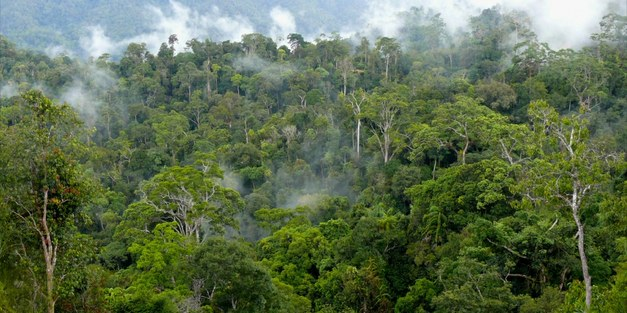 New PLOS collection: Measuring forest conservation effectiveness
