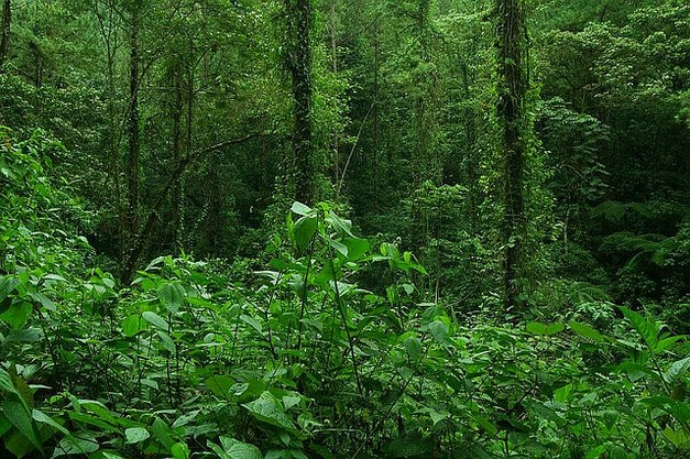 New study on photosynthetic capacity of tropical trees