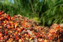 Oil palm for biodiesel in Brazil - risks and opportunities