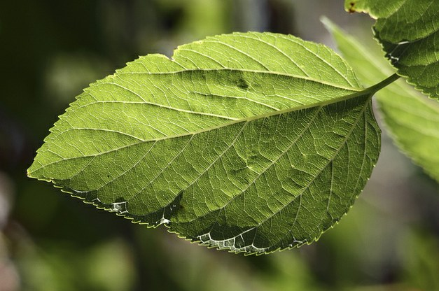 Photosynthetic temperature responses of tree species in Rwanda