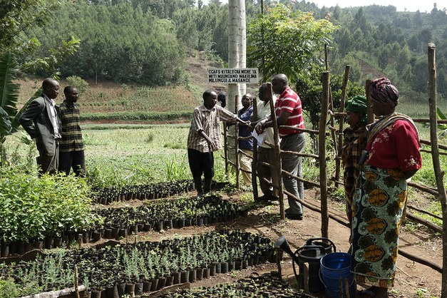 Planting trees – a strategy for healing degraded land