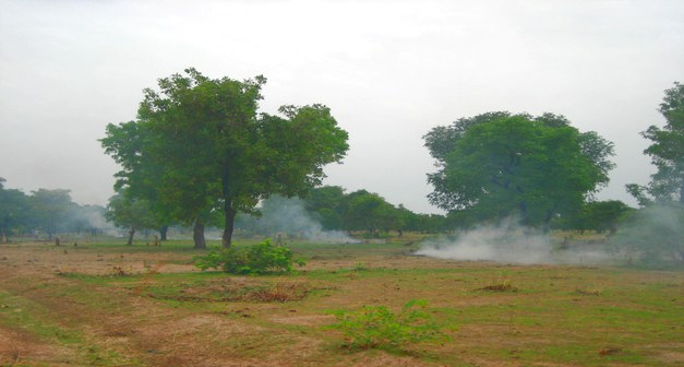 Prospects for REDD+ - Local Forest Management and Climate Change Mitigation in Burkina Faso