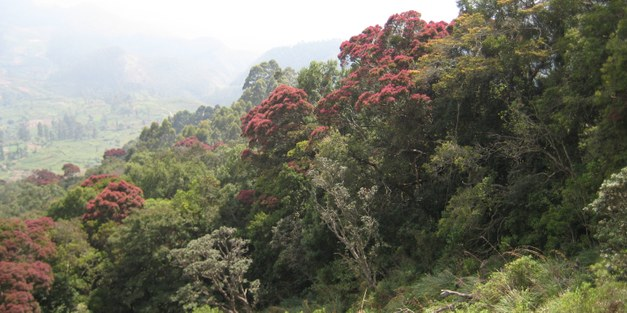 REDD+ readiness implications for Sri Lanka in terms of reducing deforestation