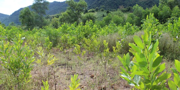 Sharing the Land: Restoring Degraded Ecosystems and Improving Livelihoods Through Agroforestry