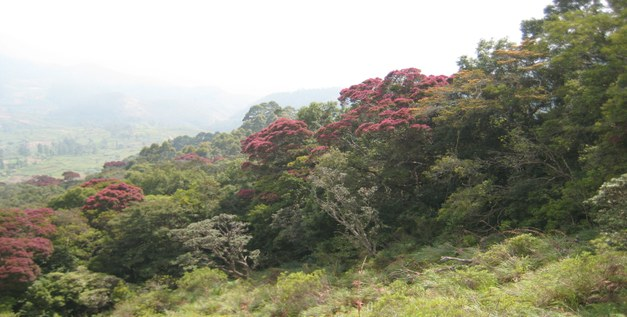 Student thesis: Tropical deforestation in Sri Lanka - A Minor Field Study investigating the impact of small scale farmers