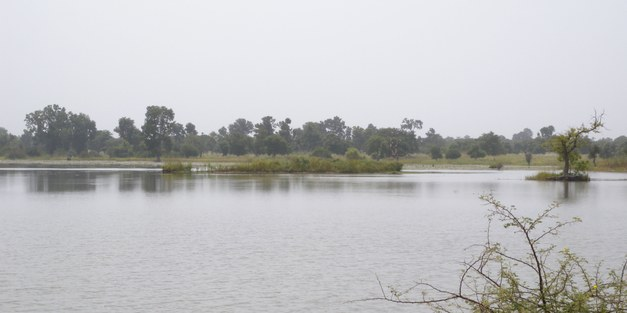 The bioenergy and water nexus