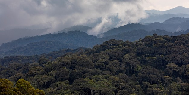 Tropical mountain forests store more carbon than expected
