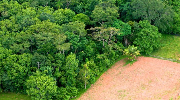Vast areas in the Brazilian Amazon may lose its protection new study finds
