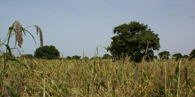 Version français du rapport d'un atelier sur les parcs agroforestiers au Burkina Faso.
