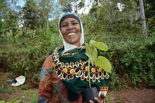 What are the possibilities for agroforestry to ensure food security?