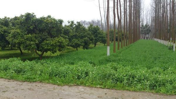 Blog: Can Carbon Finance Take Small-scale Agroforestry to The Next Level?