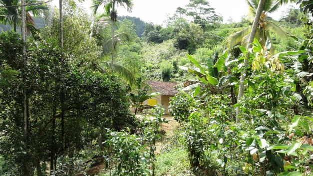 Five Focali – SIANI Blog Posts from the World Congress of Agroforestry