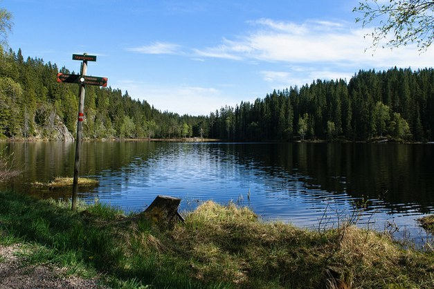 Visions for the world's forests – the role of water in forests in Sweden and in the world.