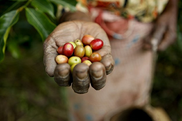 Coffee, climate and deforestation - seminar arranged by Focali, Rainforest Alliance and Universeum