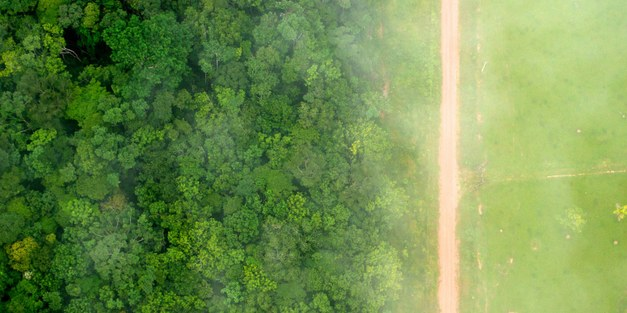Stepping up Swedish action on tropical deforestation - Dialogue on International Day of Forests