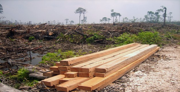 Globalization and commercial drivers behind deforestation   - How to reduce deforestation in an increasingly interconnected world?
