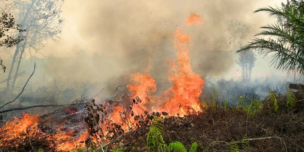 Indonesiens regnskog brinner  – vad har orsakat miljökatastrofen och hur kan regnskogen byggas upp igen?