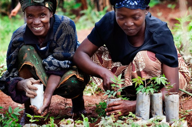 "Launch event: ""Achieving the Global Goals through agroforestry"""