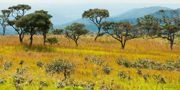 Levande landskap – påverkan på vatten, mat och klimat i Afrika