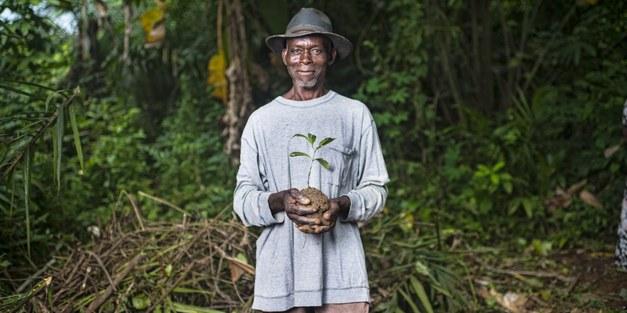 Träd i ett rubbat klimat - hjältar eller offer?