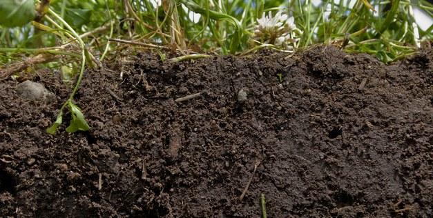 Workshop on drained organic soils