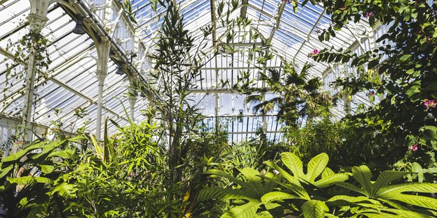 Director of science at Kew: it's time to decolonise botanical collections