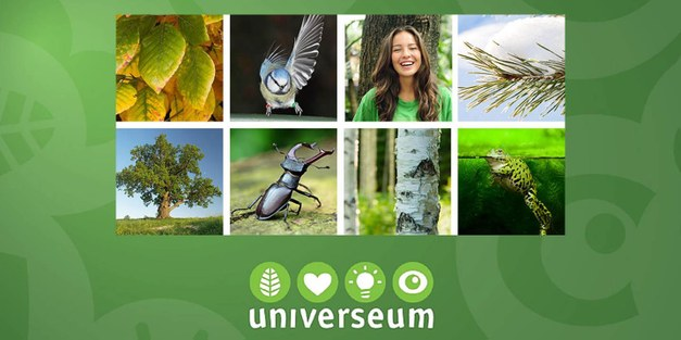 Focali a partner when Swedish forest is in focus at Universeum