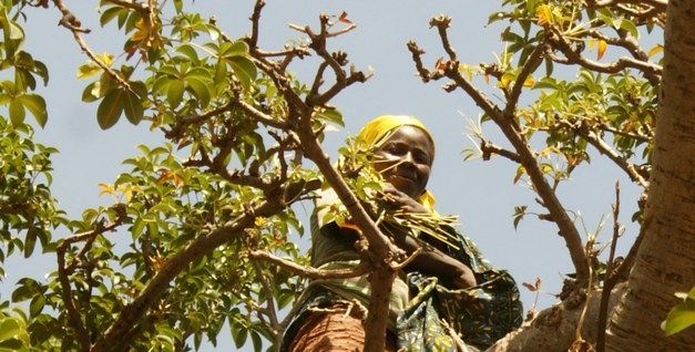 """FAO: """"Forests and trees provide benefits for food security and nutrition – what is your say?"""""""