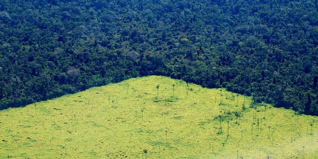 Have Brazil's deforestation policies hit the limits of their effectiveness?
