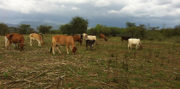 "PhD course: ""Restoration of degraded semi-arid landscapes – Livelihood, Livestock and Land use"""