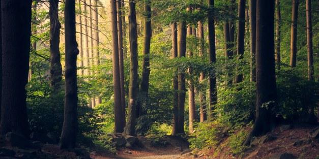 Sveriges första nationella skogsprogram sätter fokus på hållbart brukande och bevarande av skog