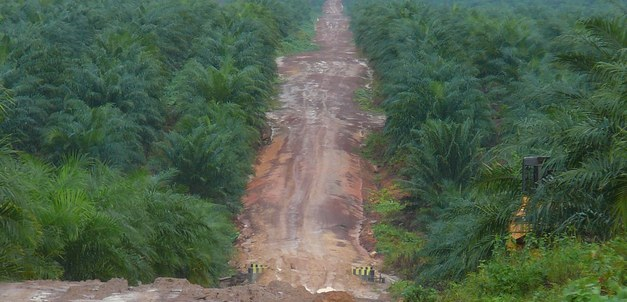 New report links Swedish banks to deforestation in Borneo